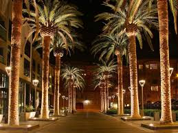 10 best outdoor lights palm trees warm winter