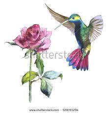 Flower And Bird - wildflower flower bird colibri watercolor stock illustration