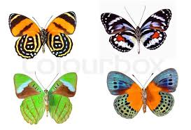four colourful butterflies stock photo colourbox