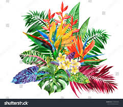 Tropical Flowers And Plants - vivid bunch different tropical flowers plants stock illustration