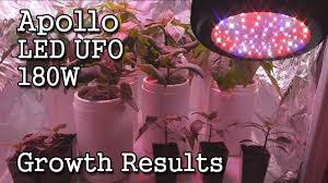 ufo led grow light apollo led ufo 180w grow light growth results final review youtube