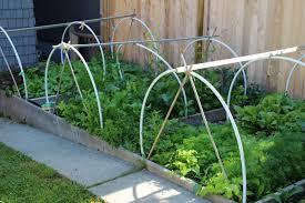 Urban Veggie Garden - urban gardening planning your winter garden vancouver observer