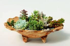 Dish Garden Ideas Top 25 Ideas About Dish Gardens On Pinterest Gardens Cactus And