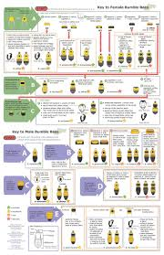 Smallpdf Key To Female And Male Bumble Bees Of Illinois Missouri Indiana