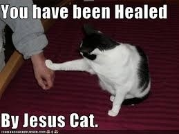 Jesus Cat Meme - jesus cat