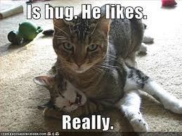 Cat Hug Meme - is hug he likes really cheezburger funny memes funny pictures