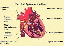 online get cheap hearts wall stickers aliexpress com alibaba group electrical system of the heart medicine human anatomy retro kraft paper posters placard wall sticker hospital
