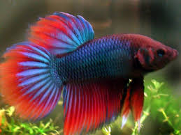 aquarium and ornamental fish business in dhaka