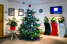 real christmas trees in your office look u0026 smell wonderful