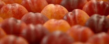 fresh fruit online buy fresh fruit online with delivery to anywhere in new zealand