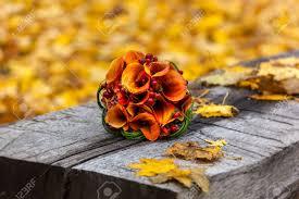 November Flowers Flowers September November Stock Photos U0026 Pictures Royalty Free
