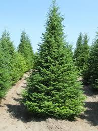 top 5 tree picks spyhollywood