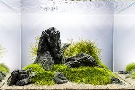 Aquascape Inspiration Aquascape No 4 Ada 45p The Planted Tank Forum