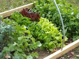 home garden advices how to start an organic garden
