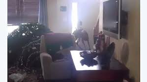 dashing through the home teen shoots deer in living room nbc4