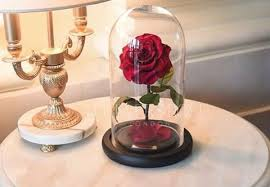 The Forever Rose Real Life U201cbella Rose U201d From Forever Rose London The Ultimate