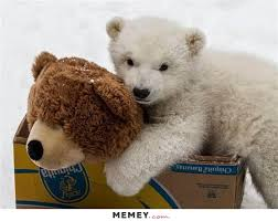 Bear Stuff Meme - a real bear holding a stuffed bear memey com