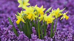 our favorite spring flowers u2013 enchanted florist inc las vegas