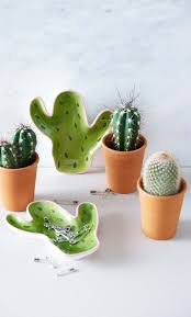 25 best green cactus ideas on pinterest cactus photography