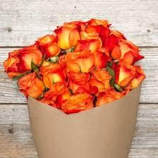 orange roses orange volcano bouquet the bouqs co