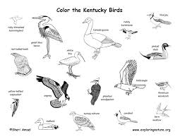 Kentucky birds images Kentucky habitats mammals birds amphibians reptiles jpg