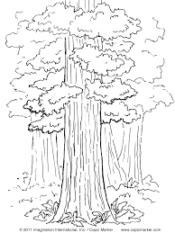 free coloring pages of redwood tree free family tree coloring