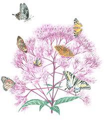 Wilmington Nc Botanical Gardens by North Carolina Botanical Garden Plants And Gardening Native