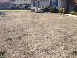 california drought boosts u0027cash for grass u0027 programs drought