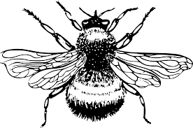 bumble bee drawing clipart