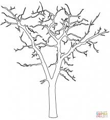 tree outline drawing best photos of christmas tree drawing