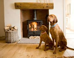 West Wales Holiday Cottages by Vizslas Enjoying The Fire In Y Den Holiday Cottage Llansteffan