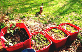 collection container vegetable garden ideas photos best image