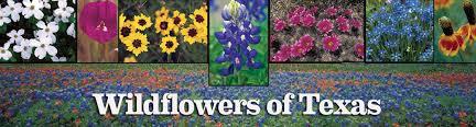 Fall Garden North Texas - wildflowers of texas texas highways