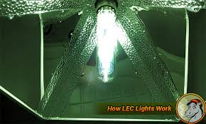 lec 630 grow light of the future lec grow lights and your cannabis crop