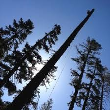 american river tree expert company tree services garden valley