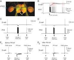 axonal conduction block as a novel mechanism of prepulse