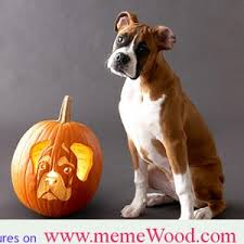 Boxer Puppy Halloween Costumes Funny Boxer Dog Quotes Funny Meme 2013 Meme Images