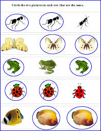 preschool picture reading worksheet find the same pictures