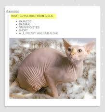 Hairless Cat Meme - animals