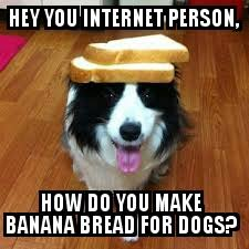 Border Collie Meme - the daily border collie memes home facebook
