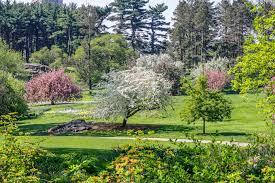 free stock photo of bloom flower garden