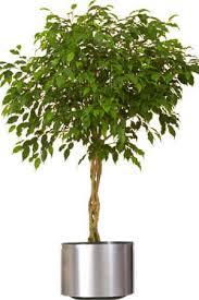 images of decorative indoor tree plants interior plants designs