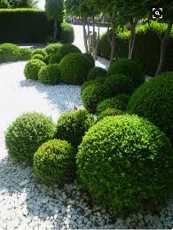 What Is A Topiary Balls Of Topiary In A Modern Minimalist Garden Design Modern