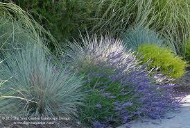 magnificent blue fescue grass vogue los angeles contemporary