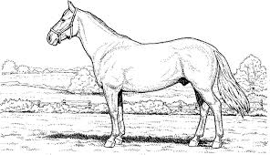 100 horse coloring pages free mustang horse coloring