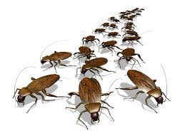 termite inspections and pest control big m pest control corpus
