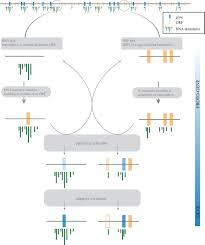 new genes from non coding sequence the role of de novo protein