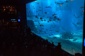 the aquarium derek torrellas 53 delta images