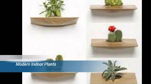 Modern Houseplants by Plants Use In Modern Interior Design Youtube