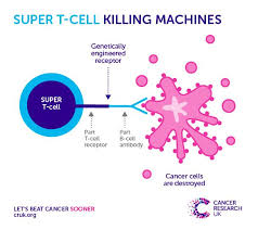 cancer graph infographics graphs net 11 best local cancer statistics images on pinterest statistics